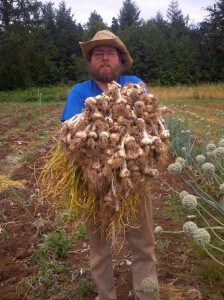 garlic harvest2